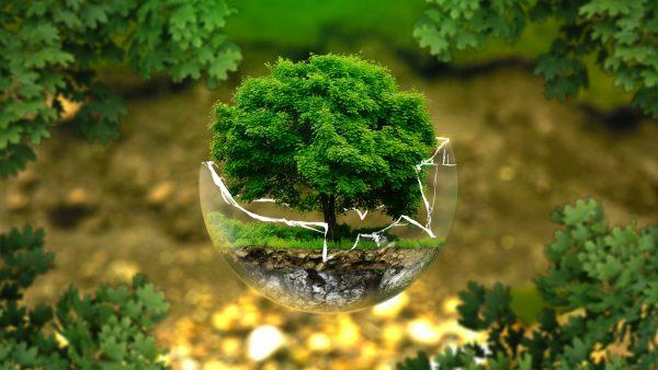 Ecologia é o estudo da relação entre ambiente e seres vivos