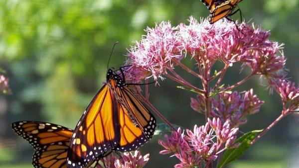 Ecossistema é o conjunto que engloba o meio ambiente e seus seres