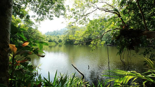 Flora do pantanal é fundamental para a manutenção da vida