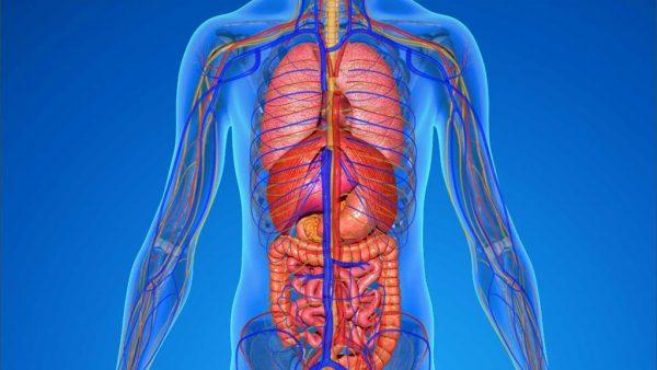 Homeostase é essencial para a adaptação e sobrevivência dos seres vivos