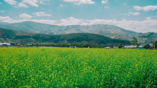 Manejo integrado de pragas pode aumentar lucratividade das plantações
