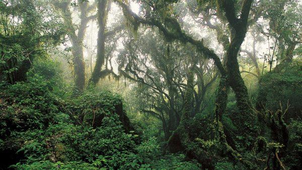 Mata é um terreno repleto de árvores, vegetações e animais silvestres