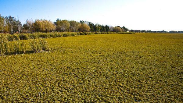 Pampa é um importante bioma brasileiro e deve ser preservado