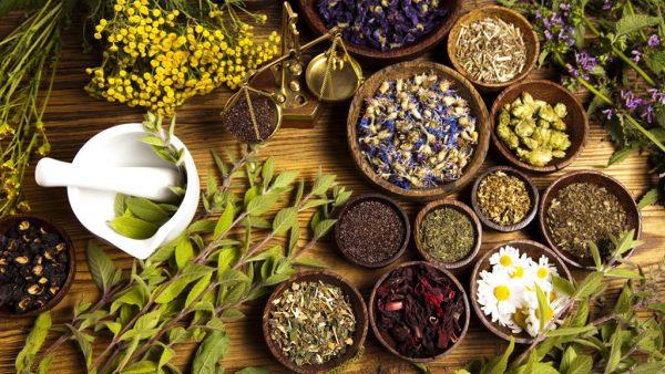 Uso de plantas medicinais é antigo e requer cuidados para eficiência
