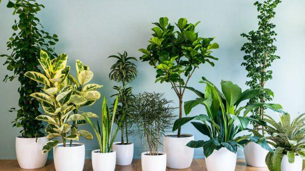 Plantas ornamentais embelezam espaços e impulsionam o paisagismo