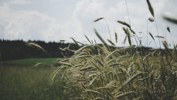 Reforma agrária é assunto de debate entre latifundiários e famílias rurais