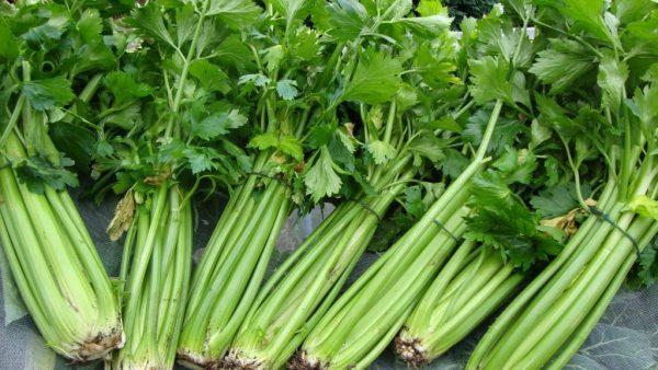 Aipo é vegetal versátil e uma rica fonte de nutrientes importantes
