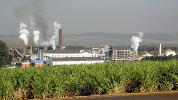 São Martinho é um dos maiores grupos sucroenergéticos do Brasil
