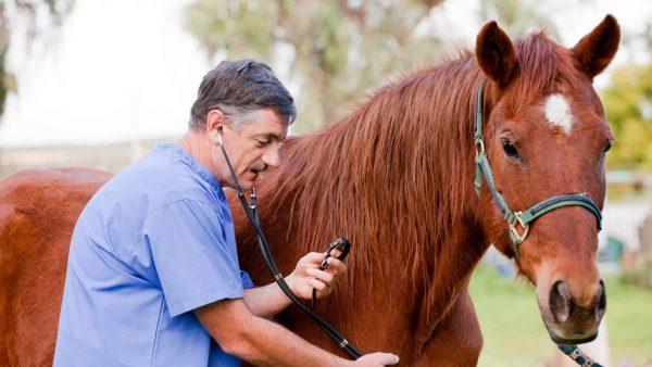 Veterinário é indispensável para cuidar dos animais do campo e pecuária
