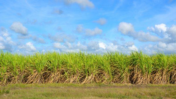Adecoagro é uma empresa líder no setor agroindustrial da América Latina