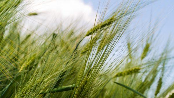 Agrária é cooperativa paranaense que movimenta milhões na agroindústria