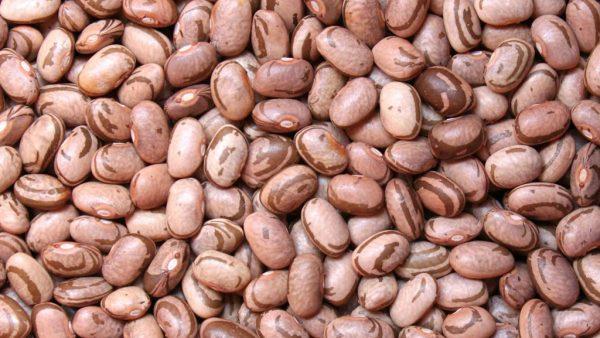 Feijão carioca, um dos mais populares no Brasil, tem excelentes nutrientes