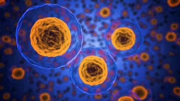 Meiose é um importante processo de divisão celular