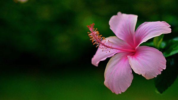 Os 8 principais tipos de flores e as suas características