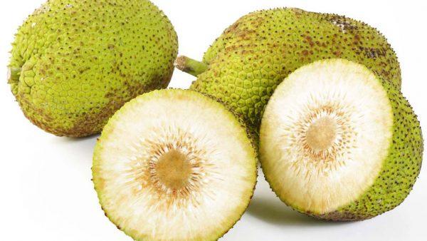 Fruta pão é parecida com a jaca e bastante comum na região Nordeste