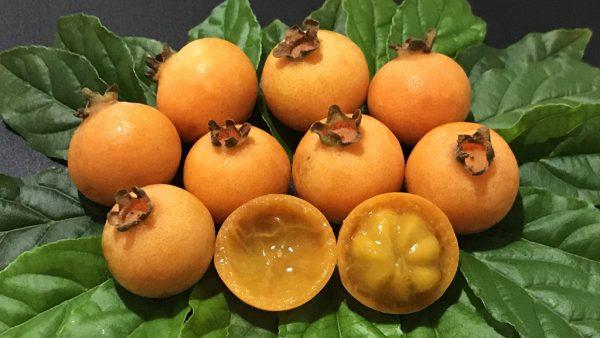 Gabiroba tem origem brasileira, é comum no cerrado e traz benefícios