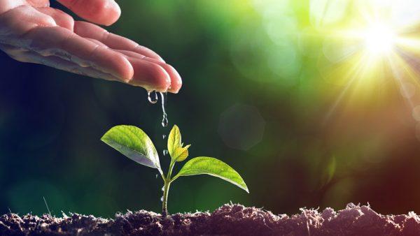 Meio ambiente e sua preservação são fundamentais para os seres vivos