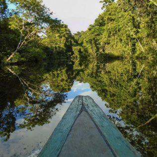 Amazônia ocupa aproximadamente 49% do Brasil e mais 8 países