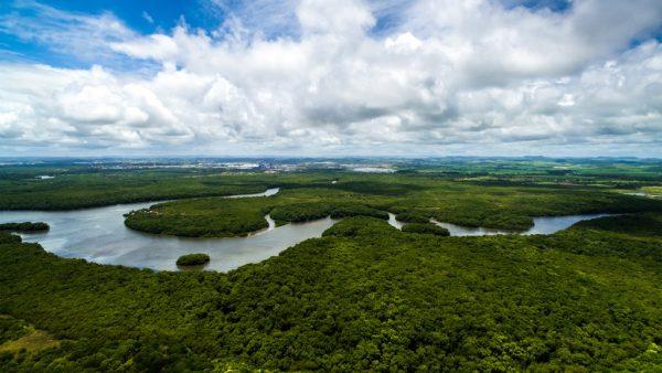 Conheça a Amazônia legal e sua grande importância para o país