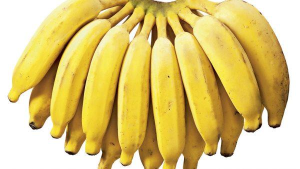 Banana prata é rica em nutrientes e de grande cultivo no Brasil