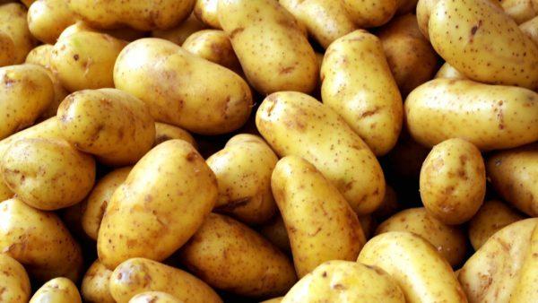 Batata inglesa é grande fonte de potássio e tem larga produção no Brasil