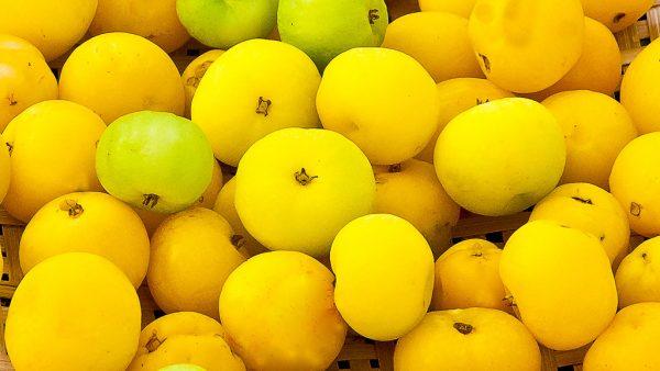 Cagaita é fruta do Cerrado comum em estados como Goiás e Piauí