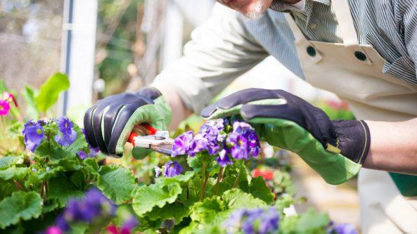 Floricultura é o cultivo de flores com objetivo ornamental ou paisagístico