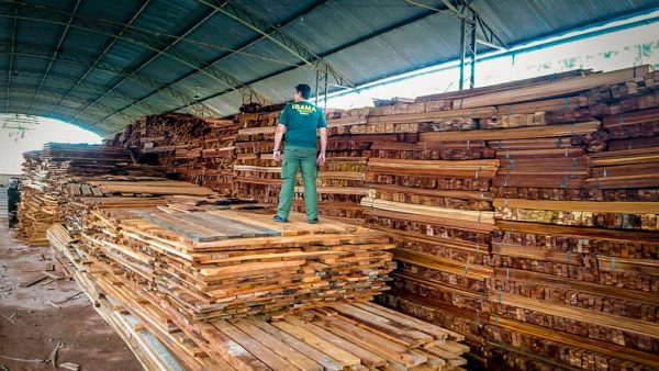 Ibama é órgão fundamental para o desenvolvimento sustentável no Brasil