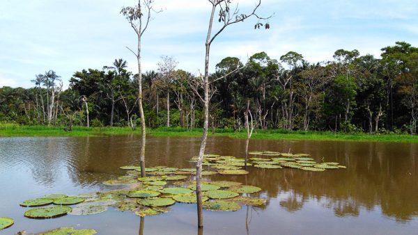Igapó é uma mata ou trecho de floresta inundado pela enchente dos rios