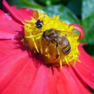 Meliponicultura é a atividade da criação de abelhas sem ferrões