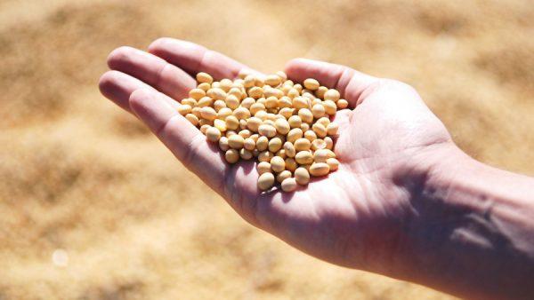 ADM do Brasil se destaca no processamento de produtos agrícolas