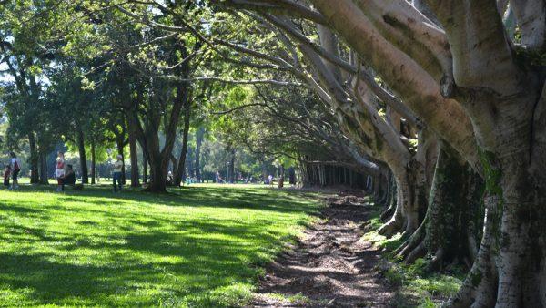 Parques florestais são importantes para a preservação dos biomas