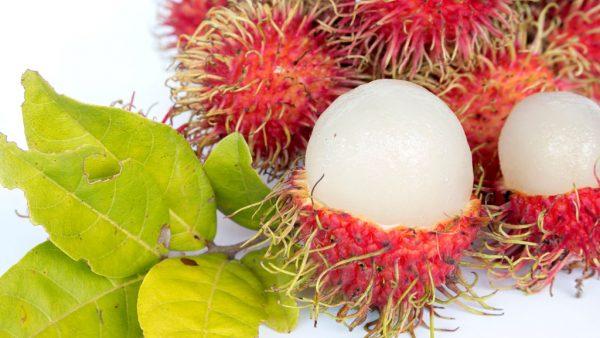 Rambutan é uma árvore tropical bastante comum no sudeste da Ásia