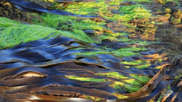 Algas são responsáveis pela produção de boa parte do oxigênio da Terra