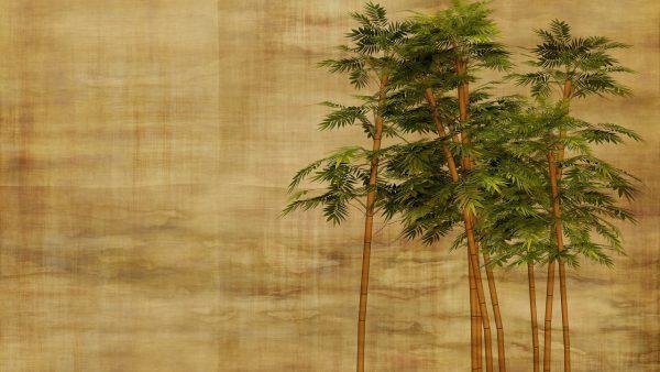 Bambu mossô é variedade usada na decoração de interiores