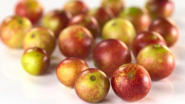 Camu camu é uma árvore frutífera com origem na Amazônia