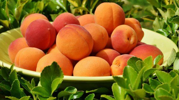 Damasco é fruta versátil que contribui para uma dieta nutritiva e saudável