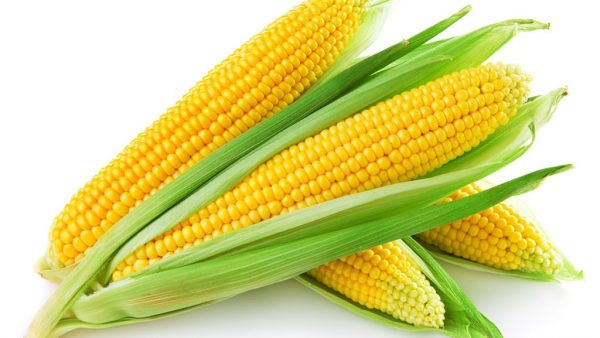 Produção e comércio de milho verde no Brasil crescem a passos largos