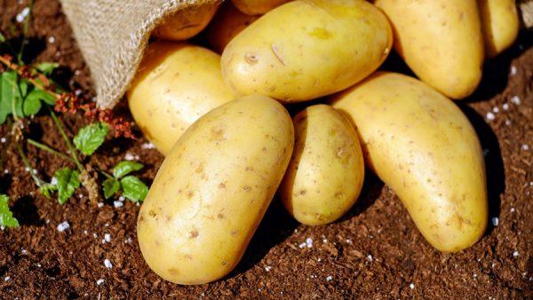Tipos de batata: quais são as principais características e benefícios?