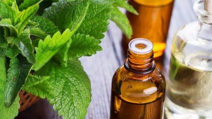 Óleo de hortelã beneficia diferentes aspectos da saúde e do corpo