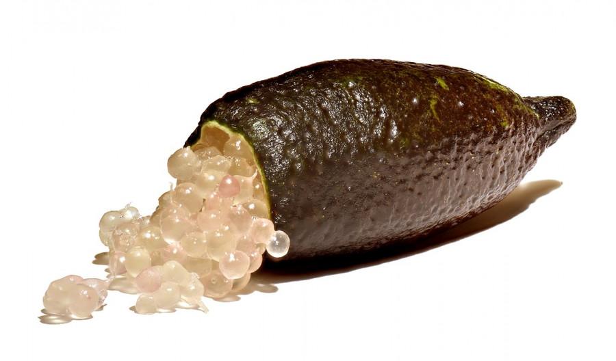 limão caviar