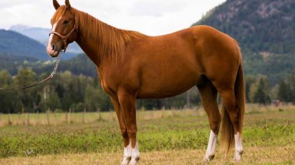 Preço do cavalo varia de acordo com a raça e a temperatura do mercado