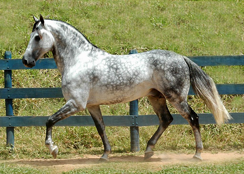 Preço do cavalo