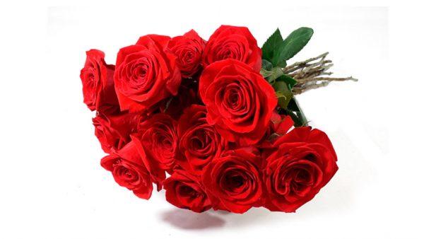 Rosas colombianas possuem botões maiores que as nacionais
