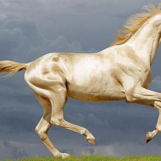Cavalos mais bonitos do mundo: conheça 6 representantes