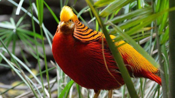 Nomes de pássaros com som agudo são indicados para algumas espécies