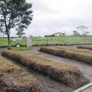 Leira é uma forma de preparar o solo para o plantio