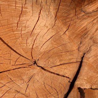 Madeira de lei tem mais resistência que outros tipos de madeira
