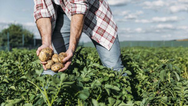 Pousio interrompe agricultura, pecuária e silvicultura por até 5 anos