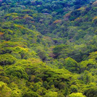 Regeneração pode ocorrer tanto no ecossistema quanto em seres vivos